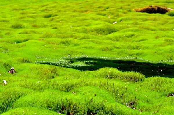 6笹蔵湿原16.05.08