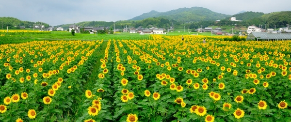 2まんのう帆山16.07.14