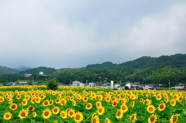 3まんのう帆山16.07.14