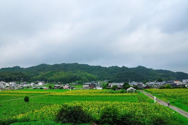 7まんのう帆山16.07.14