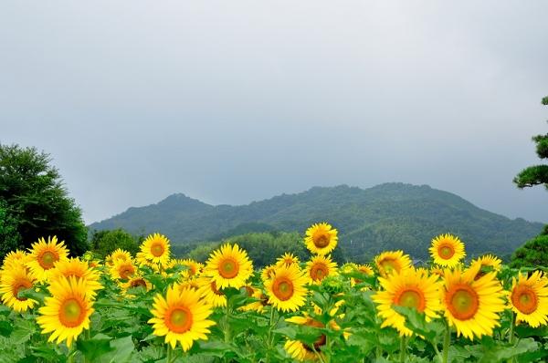 9まんのう帆山16.07.14