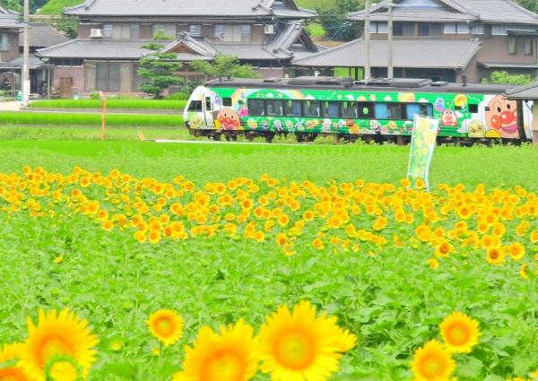14まんのう帆山16.07.14