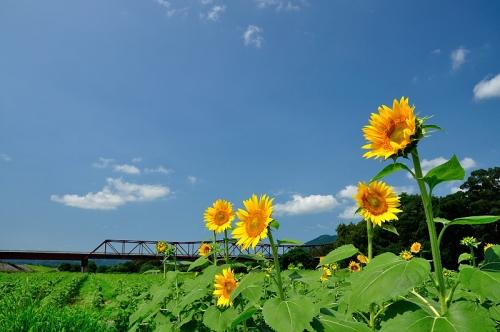 5赤橋16.07.28