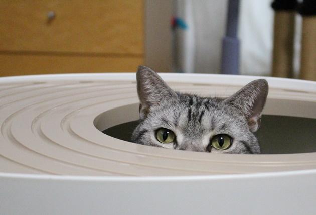 新しい猫トイレリポート