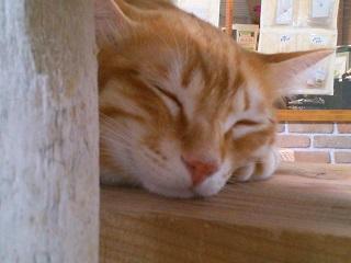猫カフェきぶん屋4