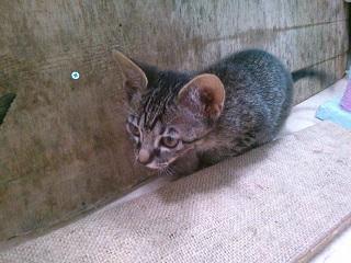 猫カフェきぶん屋3