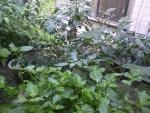 菜園2016