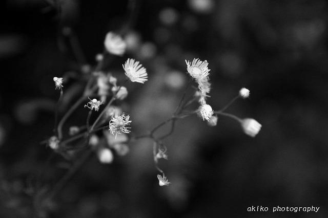 akiko_photography_little116.jpg