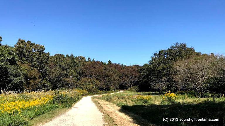 森への道@牛久自然観察の森