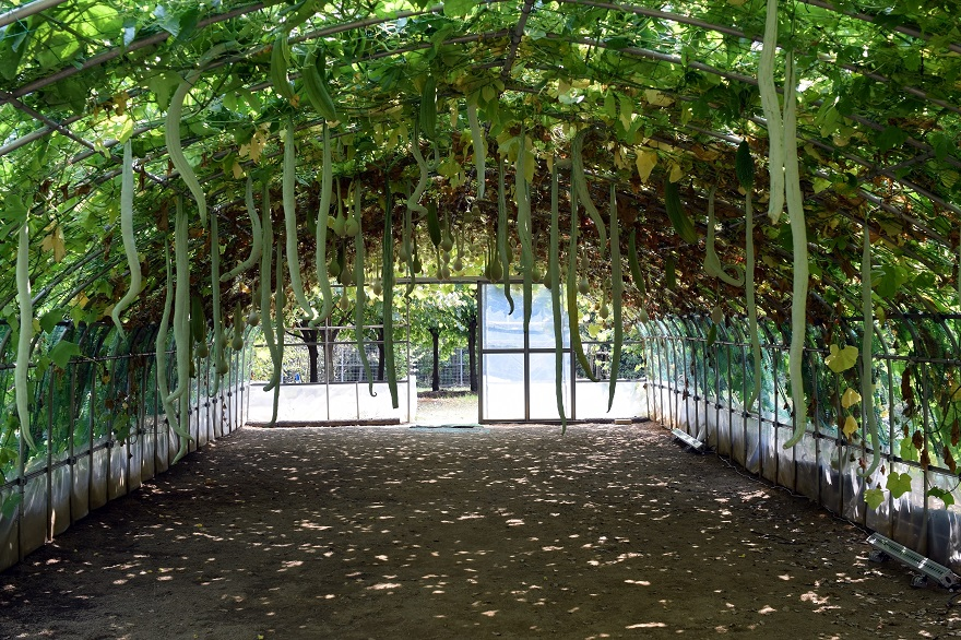緑のトンネル (0)