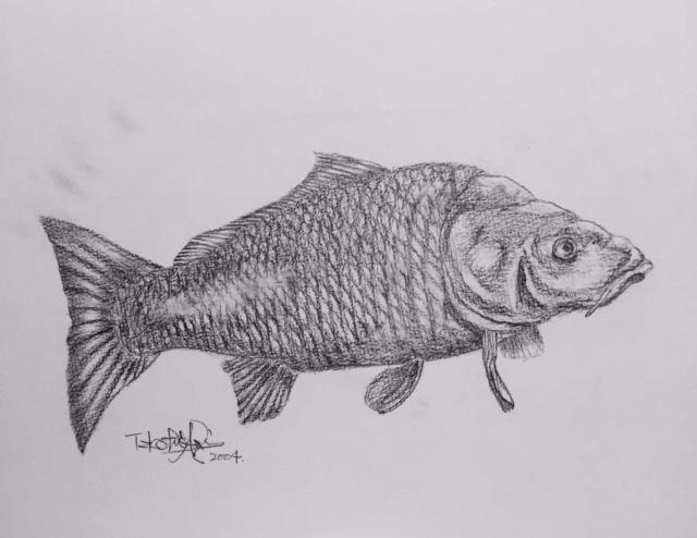 コイ 鉛筆画