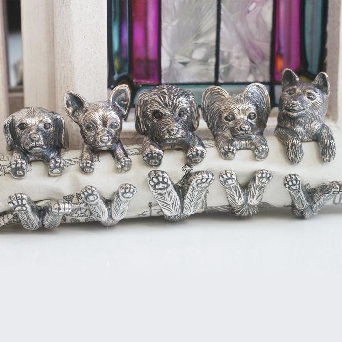 並んだ犬5匹