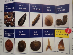 化石ガチャ⑦