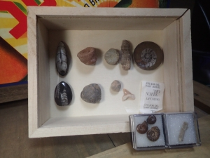 化石ガチャ⑨
