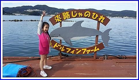 Dolphin farm (3)