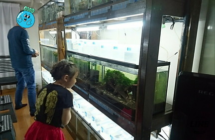 Small aquarium (2)