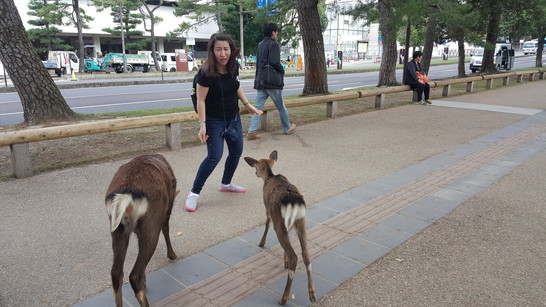 give food to deer at Nara (3)