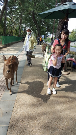 give food to deer at Nara (4)