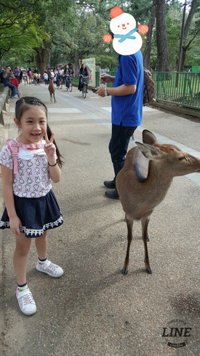 give food to deer at Nara (2)