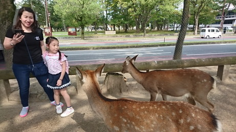 give food to deer at Nara (6)