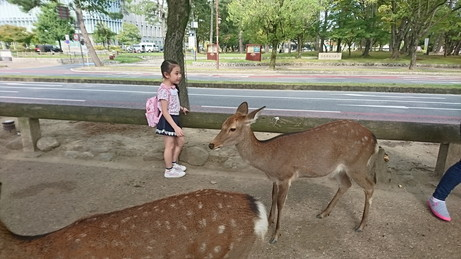 give food to deer at Nara (7)