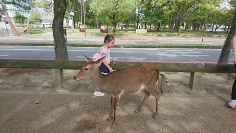 give food to deer at Nara (8)