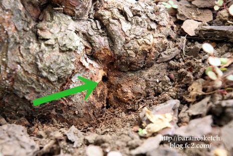 木屑除去後1