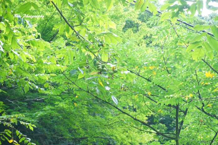 bee-親子登山9653