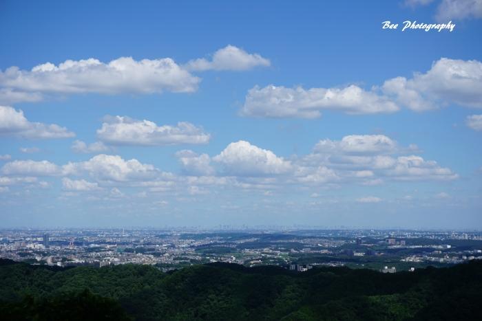 bee-高尾山9689