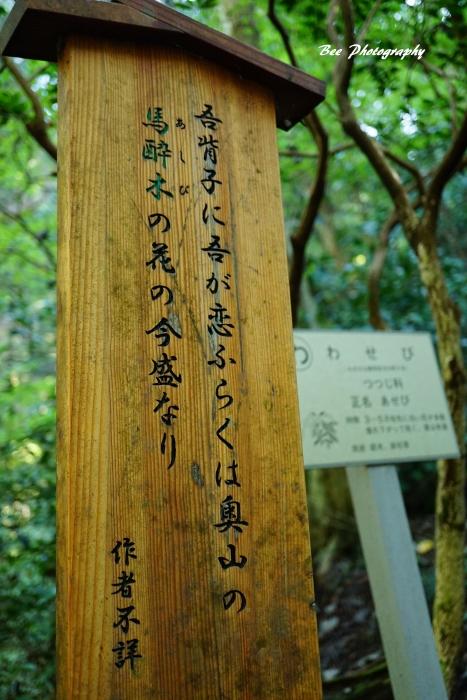 bee-高尾山いろはの森2059