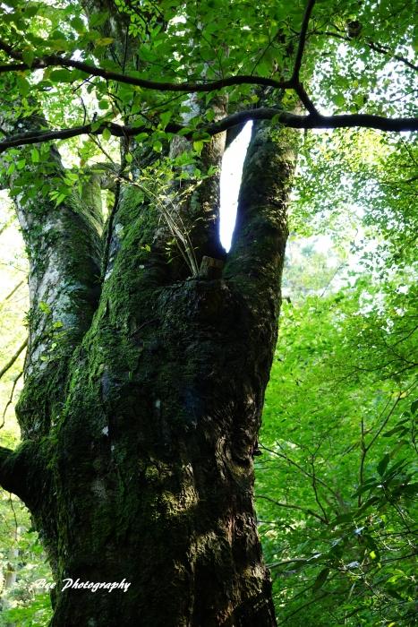 bee-高尾山いろはの森2049