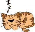 ネコ(眠ってる