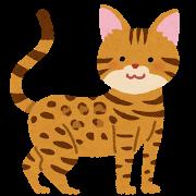 ネコ(ベンガル