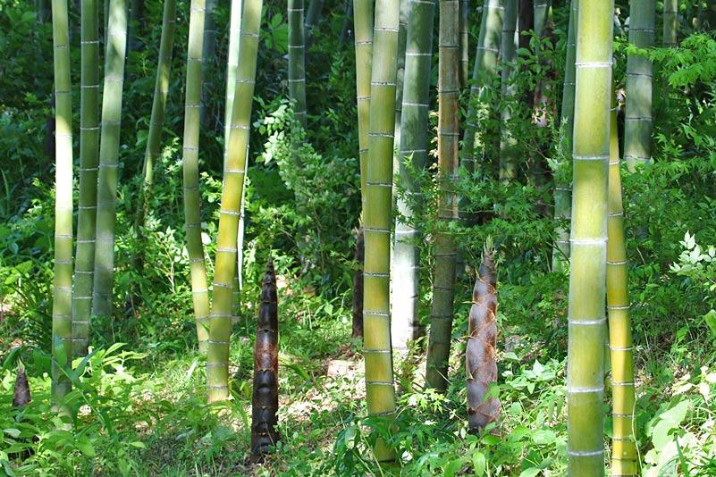 kumagai9659.jpg