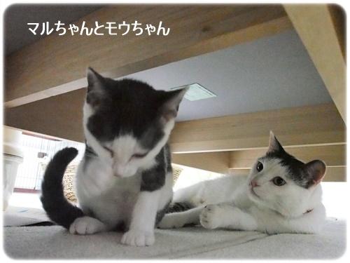 モウちゃんとマルちゃん