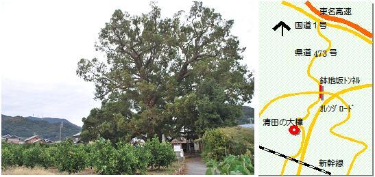清田の大樟マップ