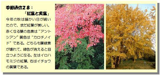 季節通信28紅葉