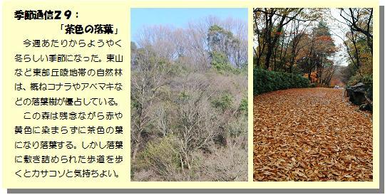 季節通信29落葉