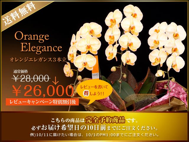 オレンジ 青 コチョウラン サプライズ お祝い