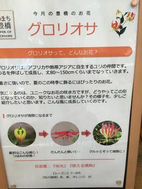 花男子 花イノベーション 豊橋駅 グロリオサ 豊川 花屋 花夢
