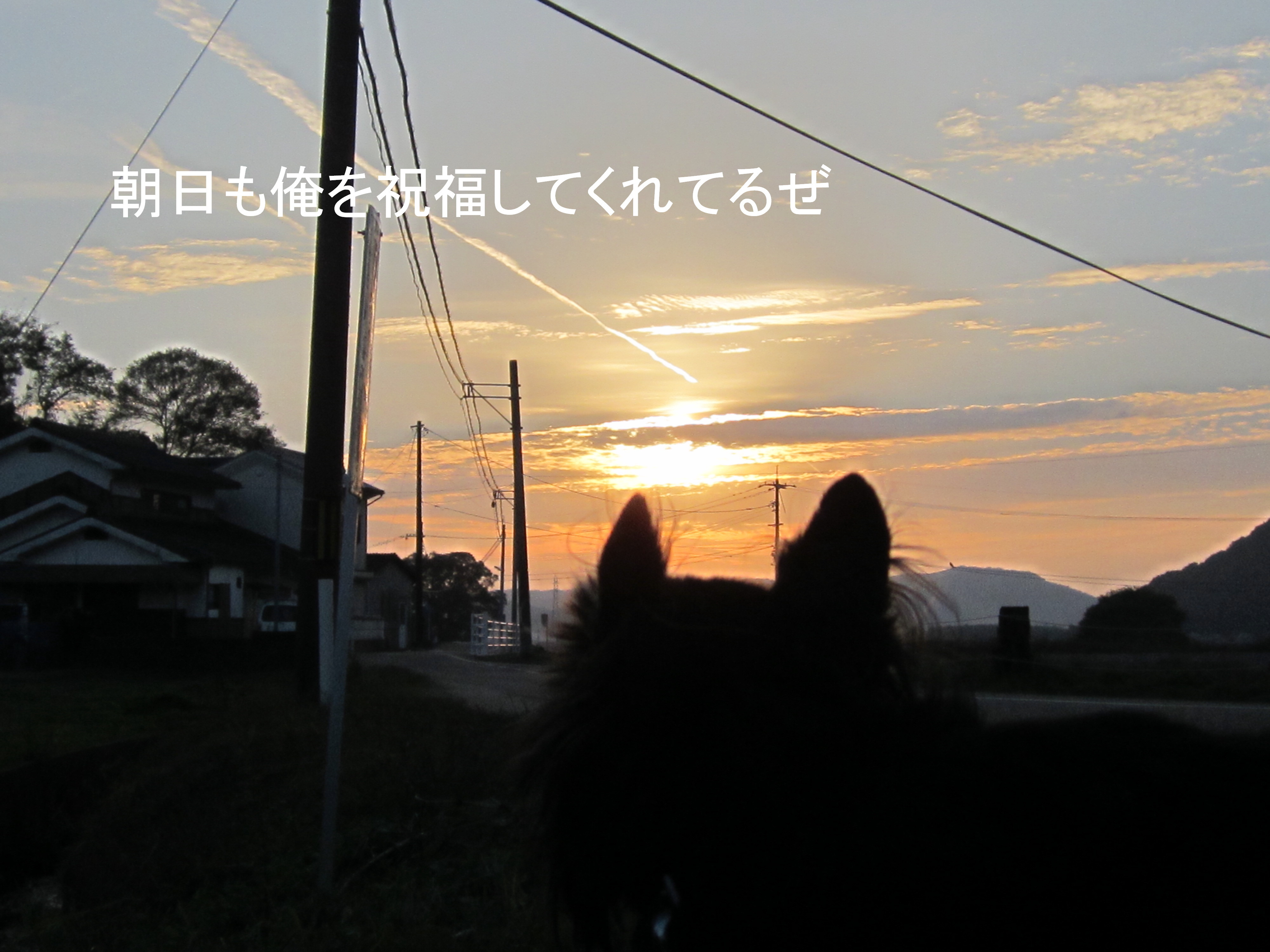 IMG_0565.jpg