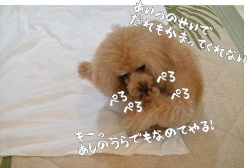 ADSC_2325_R.jpg