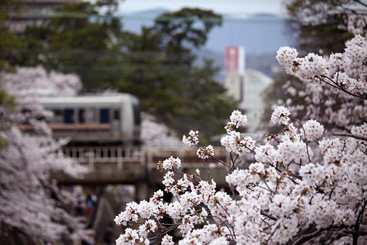 20160403_shukugawa_park-05.jpg