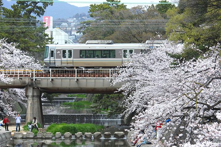20160403_shukugawa_park-07.jpg