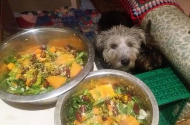 【物言えぬビーガン犬】犬猫のエサをビーガンにする動き 栄養不足で死の危険も ビーガン犬は野菜より肉たべたい