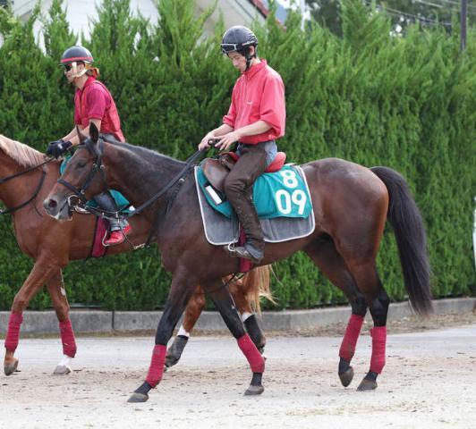 【芸能関連馬】「木梨憲武」命名馬「ゴータイミング」がデビュー戦で勝利 芸能界は空前の競馬ブーム
