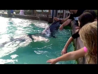 【衝撃!】イルカも噛むんだ!