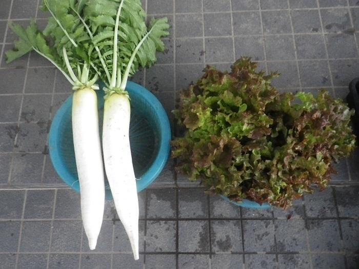 収穫18_11_07