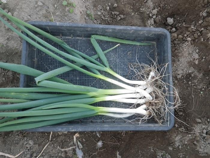 収穫3_18_11_24