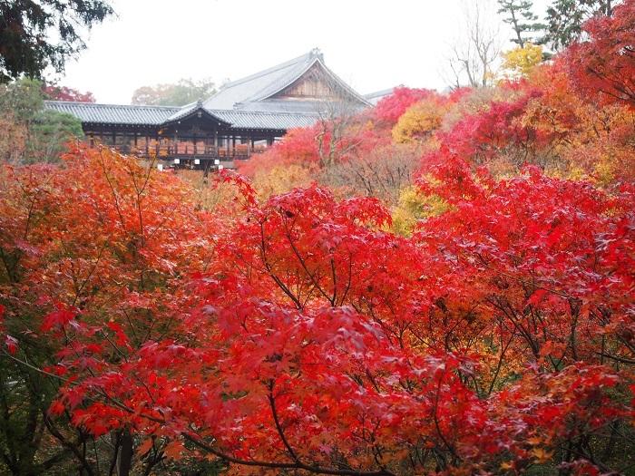 東福寺1_18_11_30